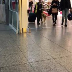 Cati & Guide Dog Klint have arrived in the UK for